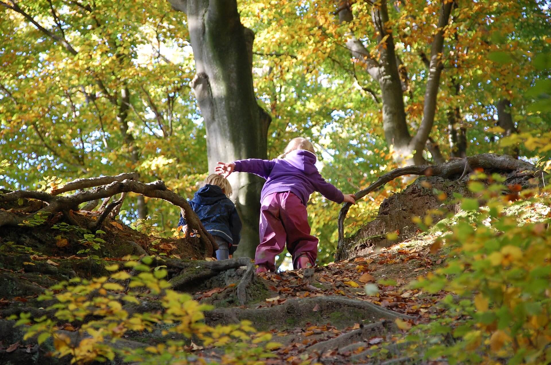 Waldkindergarten Naturkindergarten