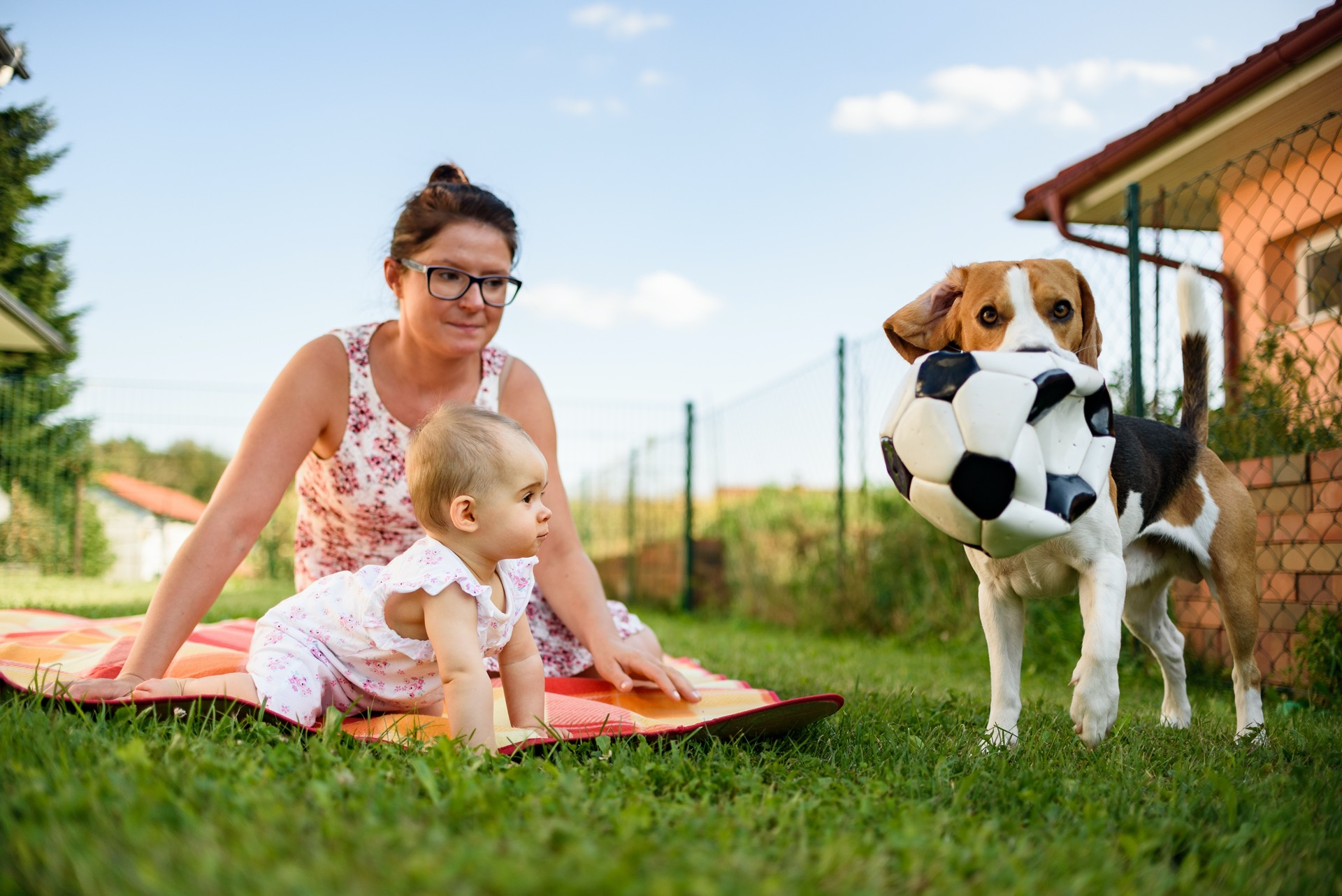 Train your Baby like a Dog RTL Kritik