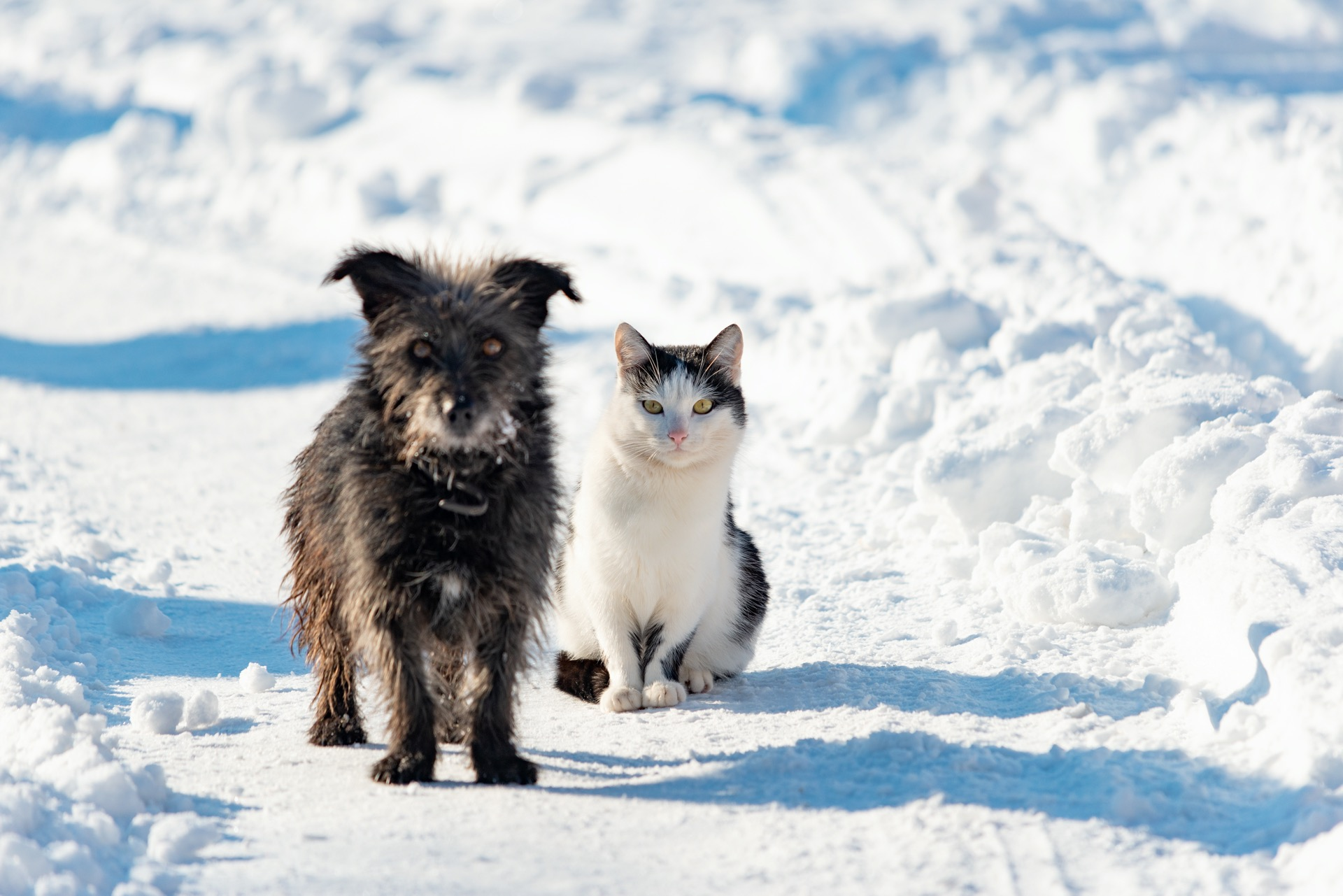 Haustiere vor Kälte schützen