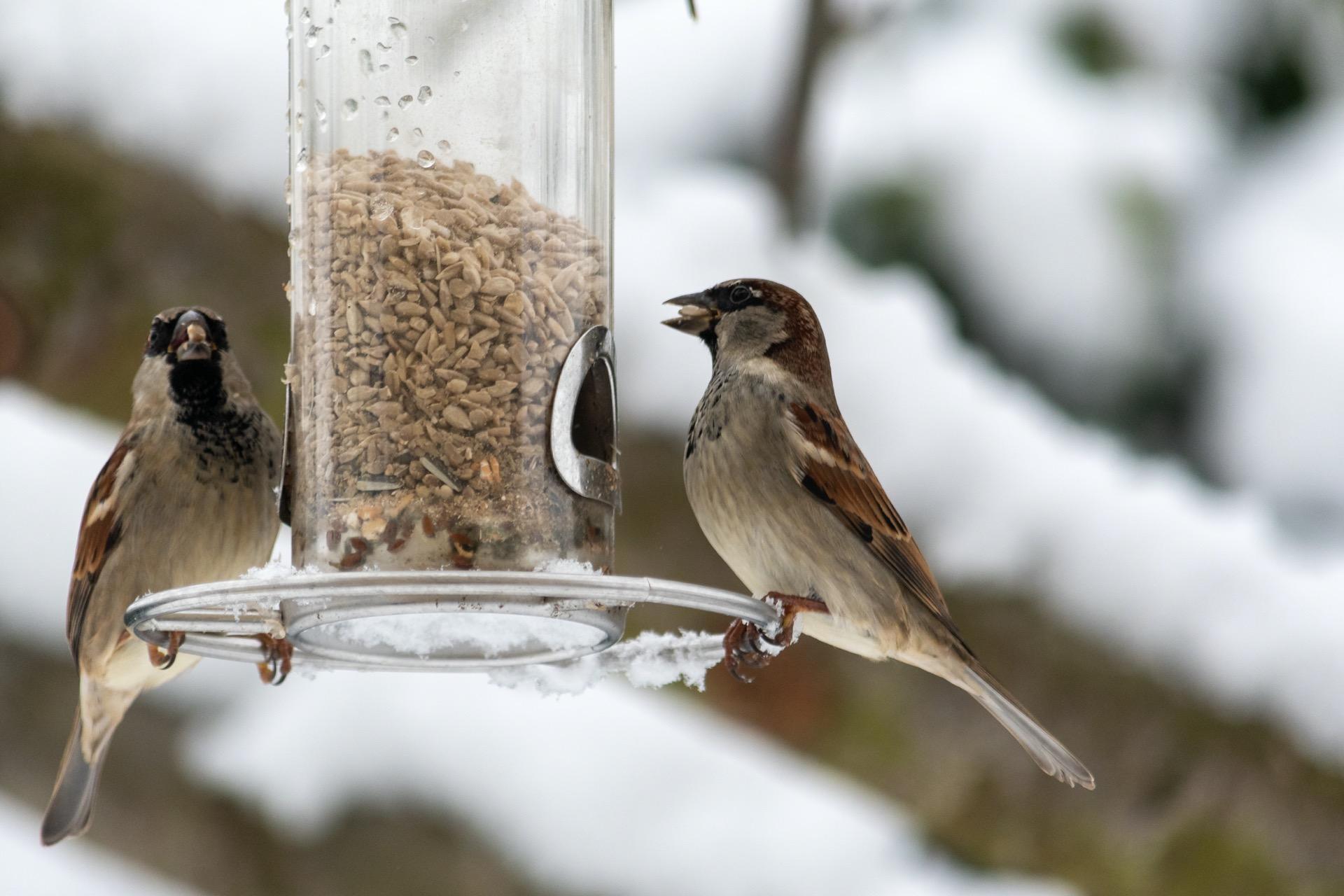 Vogel am Futter am Baum im Winter